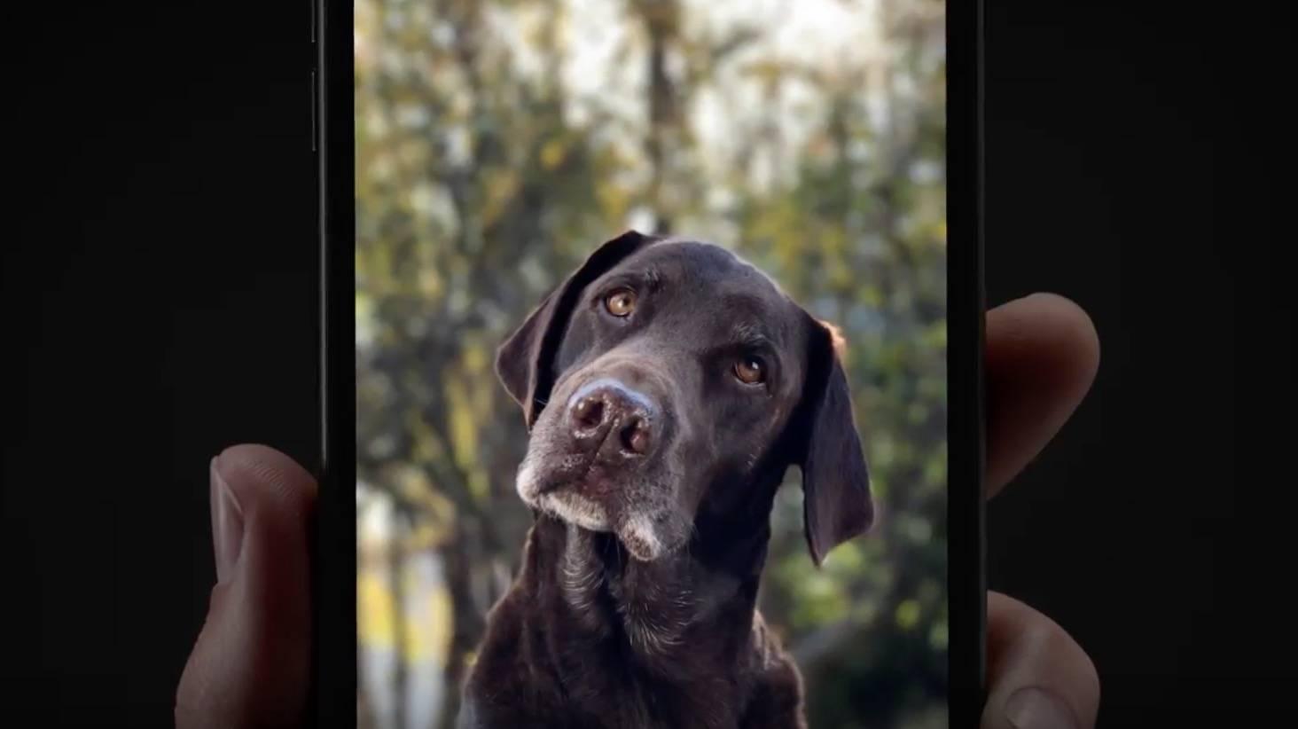 На каких айфонах есть портретная съемка: как использовать функцию портрет