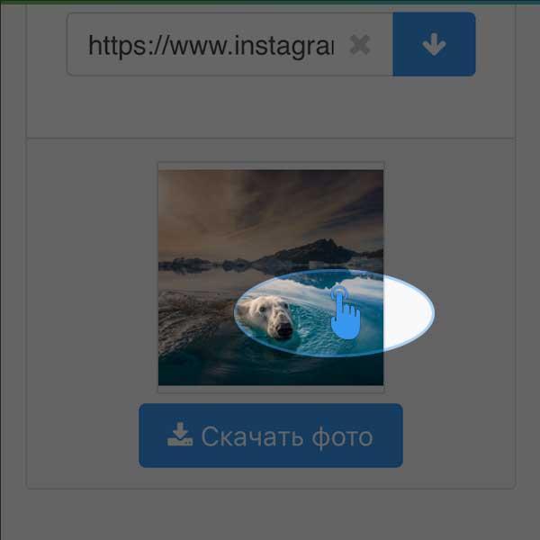Как скачать фото или видео из инстаграм на телефон и компьютер (2019)
