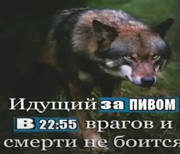 Лучшие цитаты из тик тока. подборка на русском
